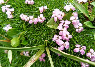 Blumen im Gebirge